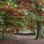 Winkworth Arboretum.