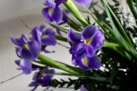 Flower of the month - January